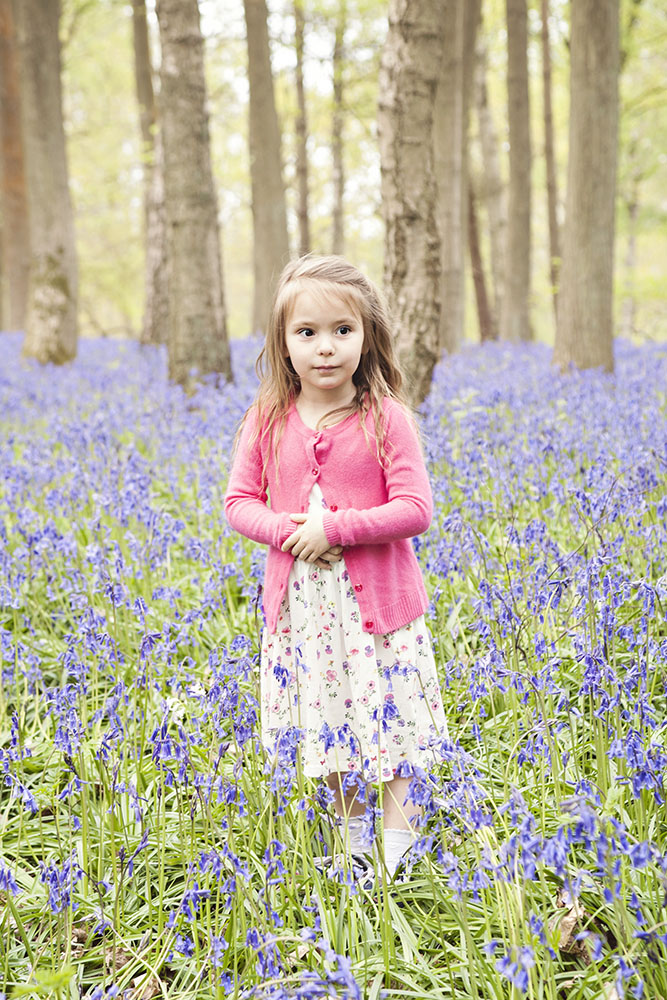 Bluebell Fields 01